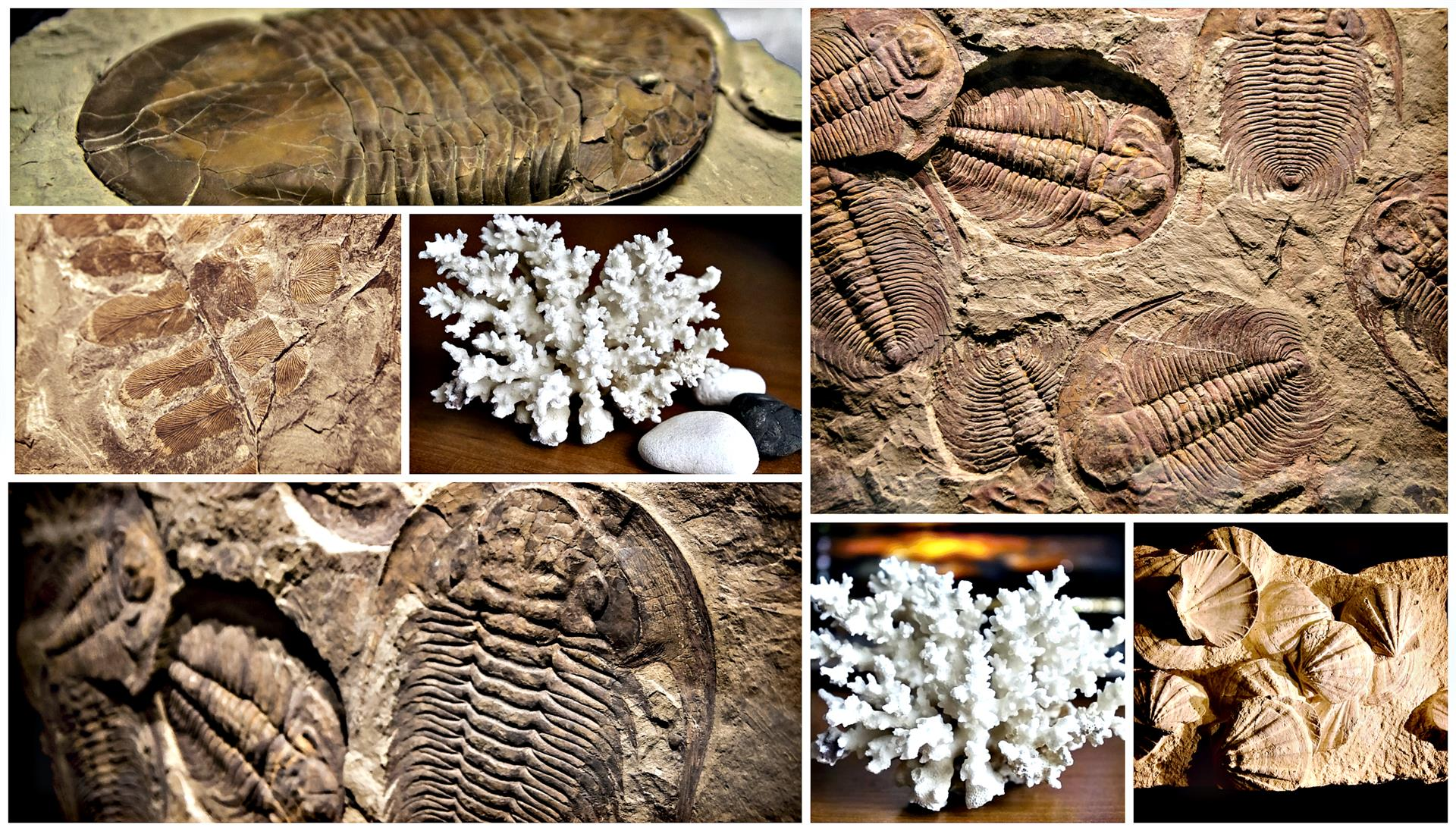 Fossils graphic